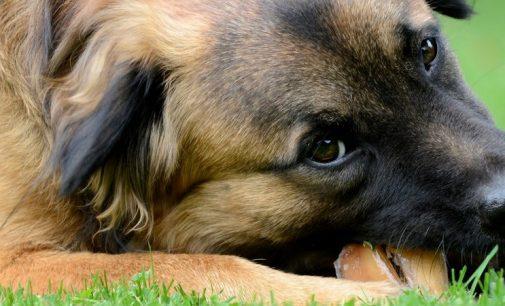 Irish Dog Foods is Exporter of the Year 2017