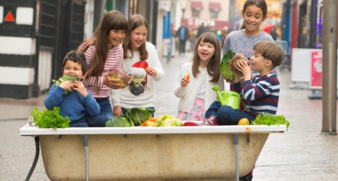 Deadline For Applications For €75,000 'Get Ireland Growing' Fund Looming