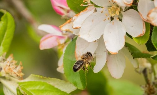 Cork Agtech Company Partners With Inmarsat to Save Bees and Increase Global Crop Production