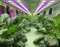 British companies lead the way with new vertical farm in Bermondsey